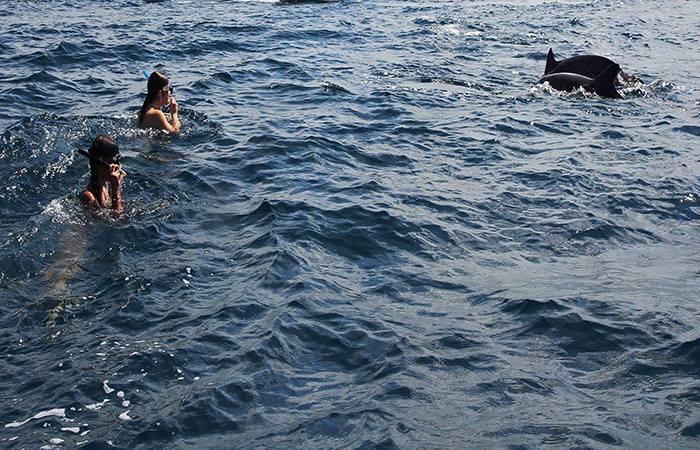 Kizimkazi Dolphin Tour - Zanzibar | Jambo Guest House