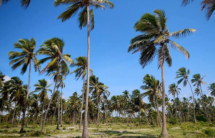 North and East Coasts Trip - Zanzibar | Jambo Guest House